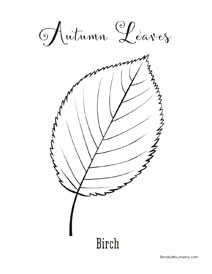 Birch autumn leaf coloring page - SmokyMountains.com
