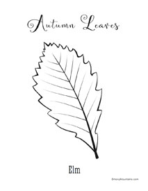 Elm autumn Leaf coloring page - SmokyMountains.com