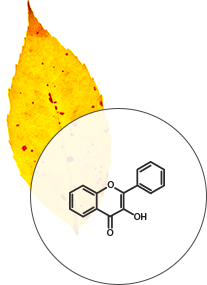 Flavonol color pigments diagram - SmokyMountains.com