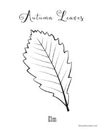Elm autumn Leaf coloring page - SmokyMountains.com