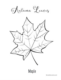 Maple autumn Leaf Coloring Page - SmokyMountains.com