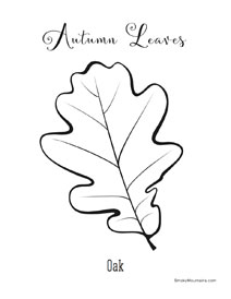 Oak autumn Leaf Coloring Page - SmokyMountains.com