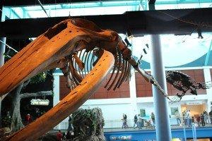 giant-fish-skeleton