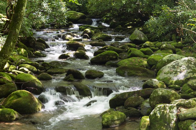 Mountain Stream with Moss Covered Boulders