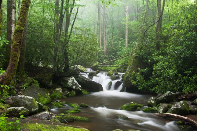 Roaring Fork Motor Nature Trail