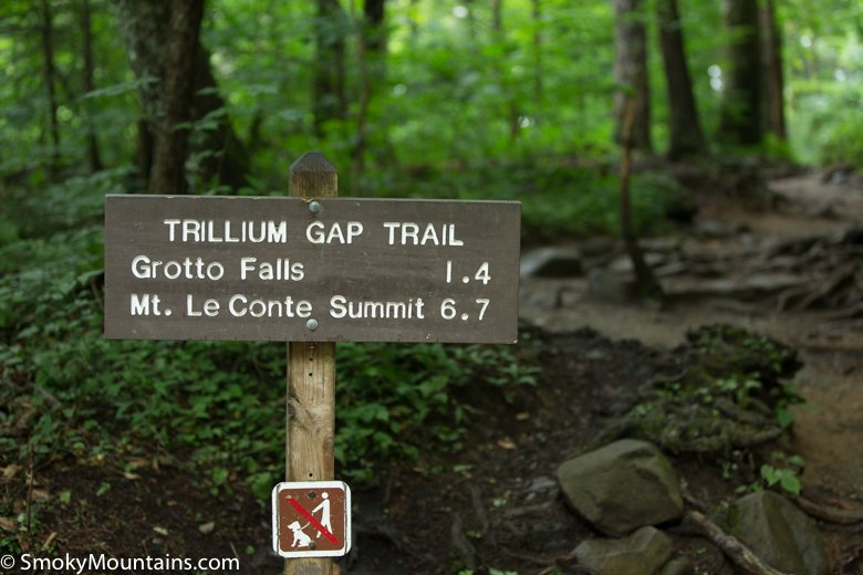 National Park Hikes - Grotto Falls Trail - Original Photo
