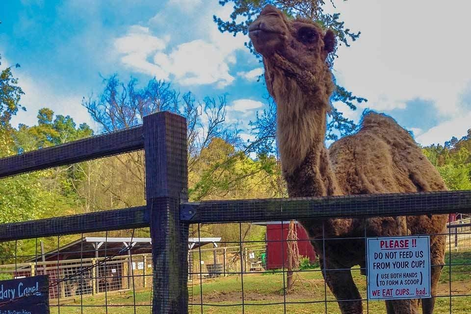Sevierville Things To Do - Smoky Mountain Deer Farm & Exotic Petting Zoo - Original Photo