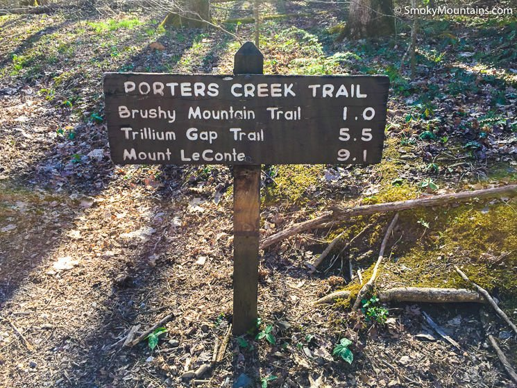 National Park Hikes - Porters Creek Trail: Beautiful & Peaceful Hike - Original Photo