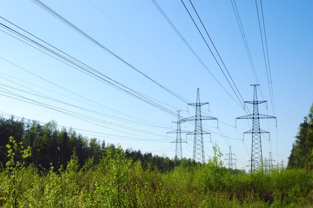 power lines in forest
