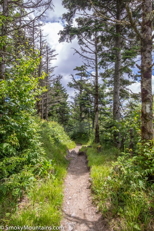 National Park Hikes - Charlies Bunion Hiking Trail - Original Photo