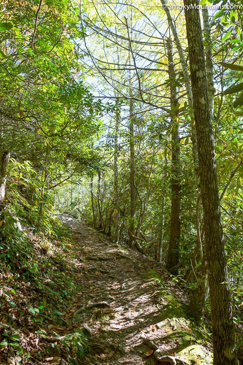 National Park Hikes - Cove Mountain Trail - Original Photo