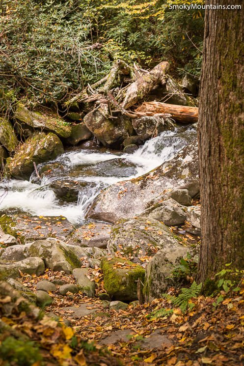 National Park Hikes - Ramsey Cascades Trail - Original Photo