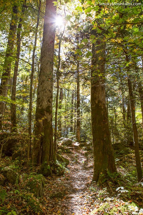 Ramsey-Cascade-Trail-Smoky-Mountains-32