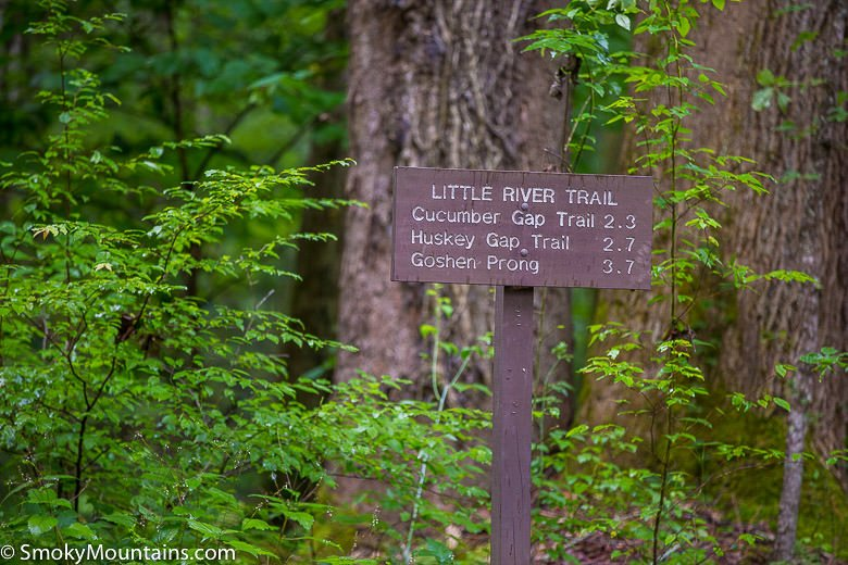 National Park Hikes - Little River Trail - Original Photo