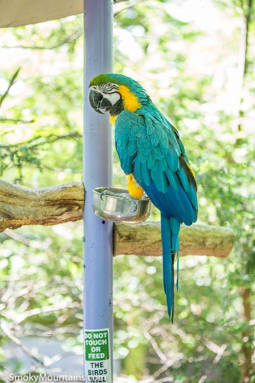 Parrot at Parrot Mountain