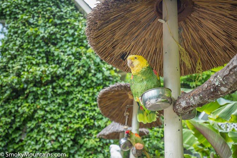 Bird on pedestal