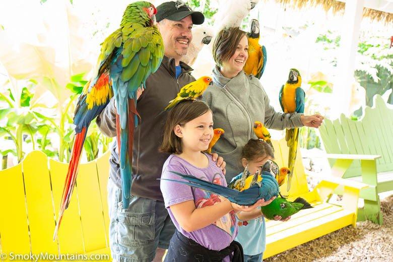 Family Taking Photos at Parrot Mountain