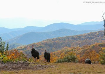 5 Reasons To Visit The Smoky Mountains During Thanksgiving