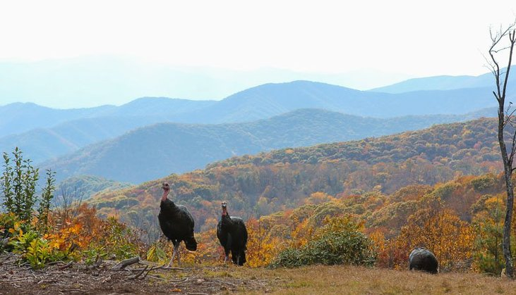 Smoky Mountain Vacation Ideas December 2019 5 Reasons To Visit The Smoky Mountains At Thanksgiving