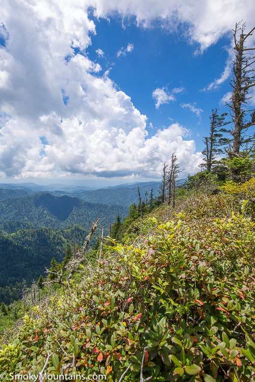 National Park Hikes - Trillium Gap Trail to Mount LeConte - Original Photo
