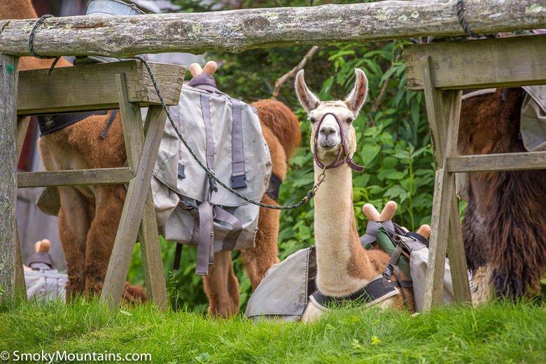 Mt-Leconte-Via-Trillium-National-Park-Hike-248