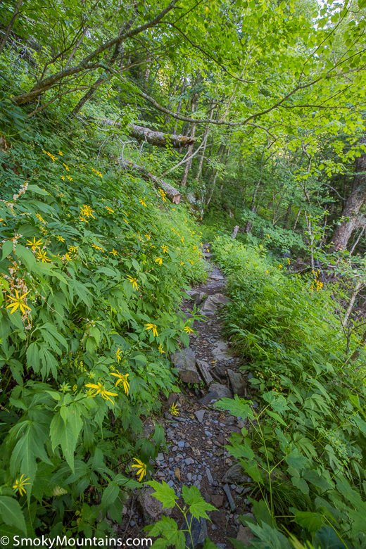 Trillium Gap Trail Review with 30+ Photos & Hiking Tips