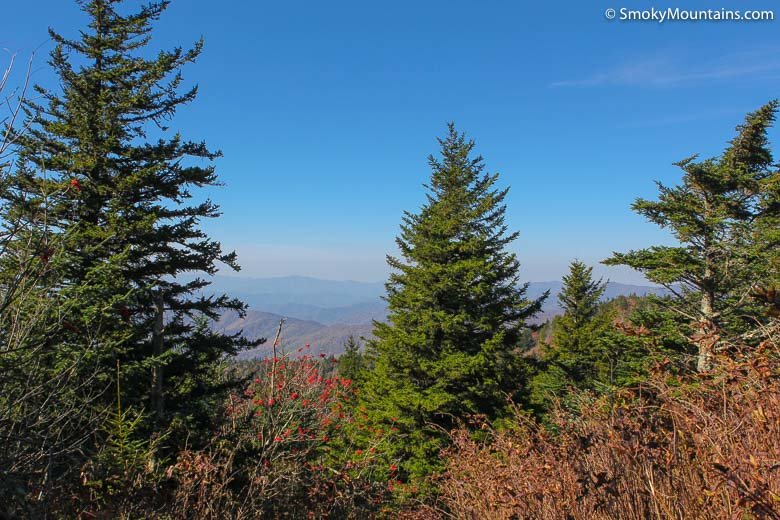 National Park Hikes - Silers Bald - Original Photo