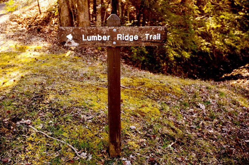 National Park Hikes - Lumber Ridge Trail - Original Photo