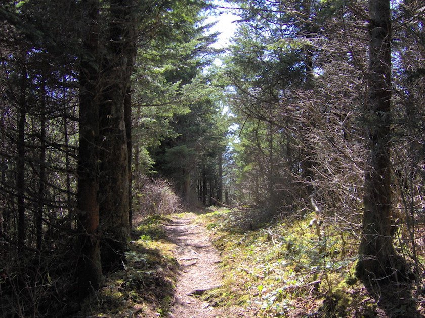 National Park Hikes - Spruce Fir Trail - Original Photo
