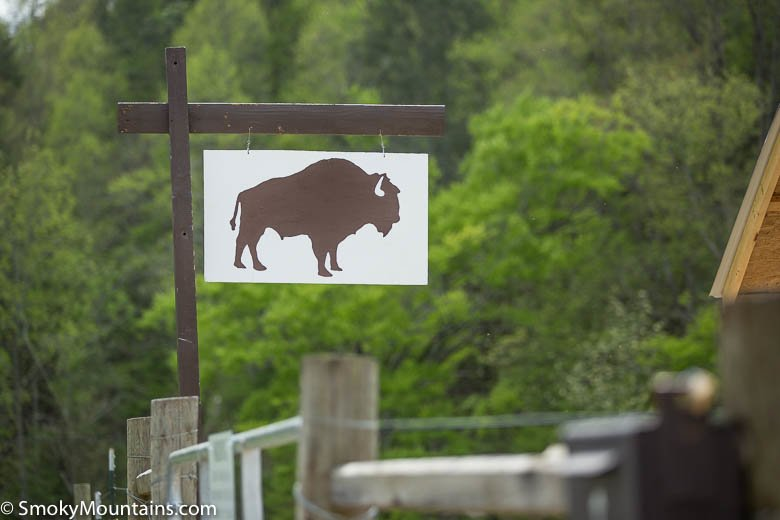 Gatlinburg Things To Do - Gatlinburg Buffalo Farm - Original Photo
