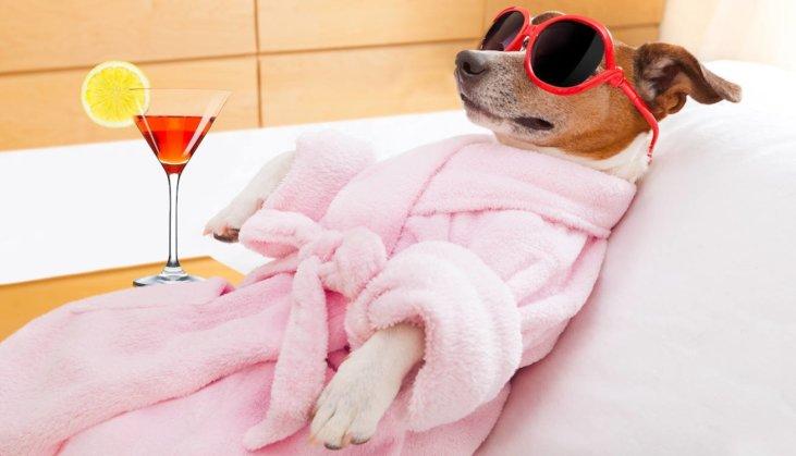 Find A Pet Friendly Hotel