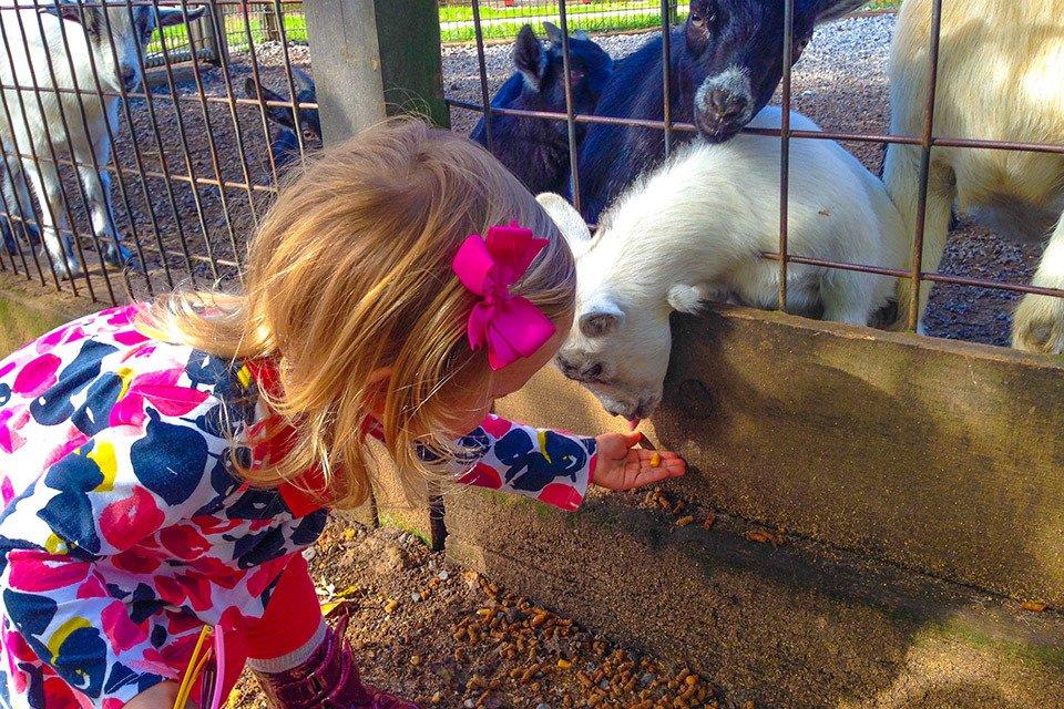 Little Girl feeding Baby Goat