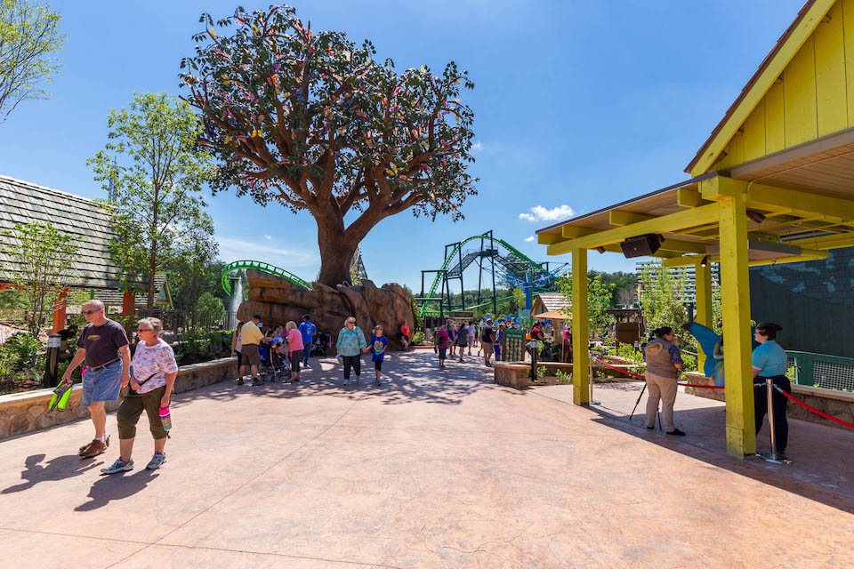 The Wildwood Tree stands the center of the hustle and bustle of park goers