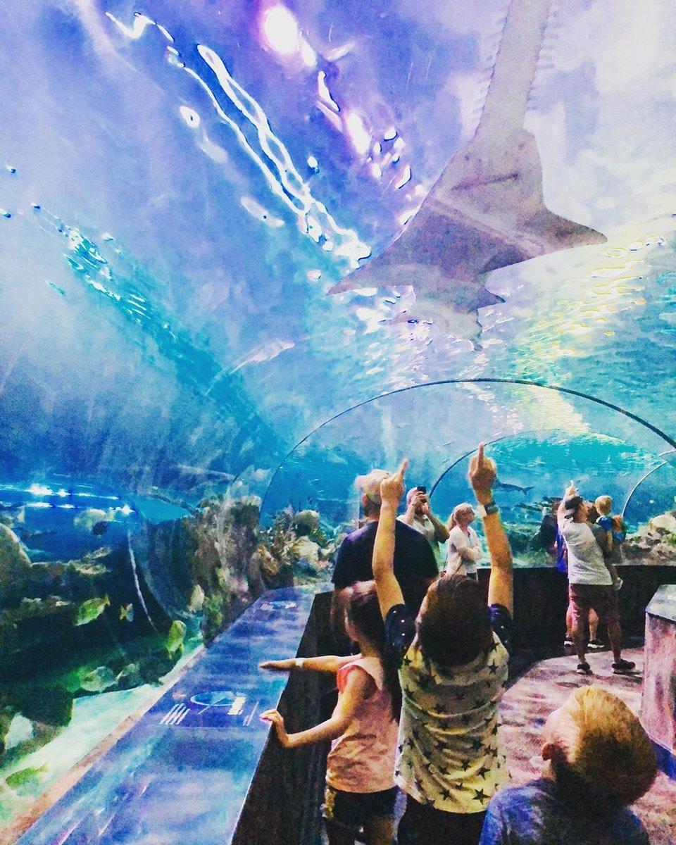 Kids walking through Shark Lagoon