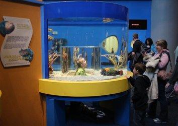 6 Things Your Kids Will Love at Ripley's Aquarium in Gatlinburg