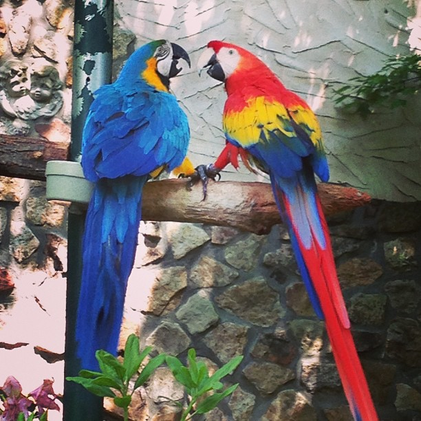 Two parrots sit on a branch at the Island