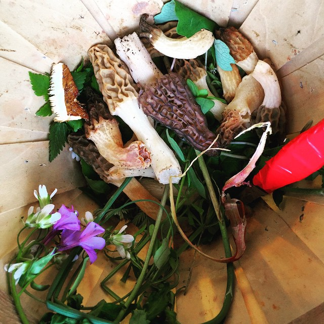 mushrooms, flowers and leaves in a wooden basket