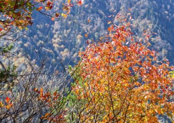 Top 5 Trails to See Fall Foliage in the Great Smoky Mountains