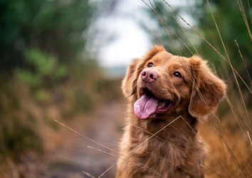8 Dog Friendly Spots in Sevierville, TN