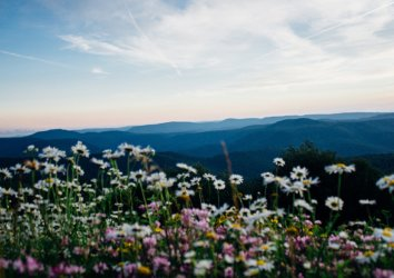 Best Spots to Spy Spring Wildflowers in the Great Smoky Mountains