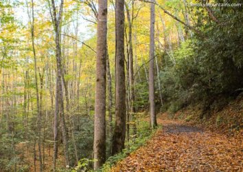5 Great Lesser-Known Trails in Great Smoky Mountains National Park