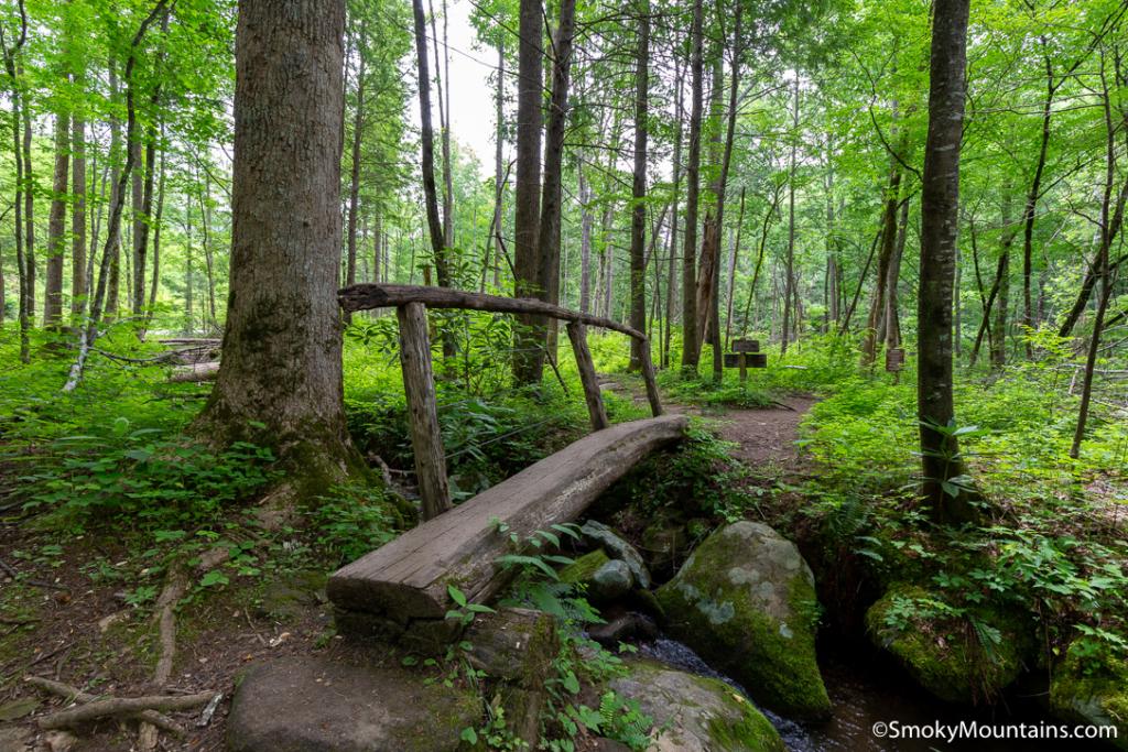 National Park Hikes - Twin Creeks Trail - Original Photo