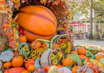 Sevierville in the Fall: Everything You Need to Know