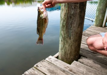 Ultimate Guide to Fishing in Asheville