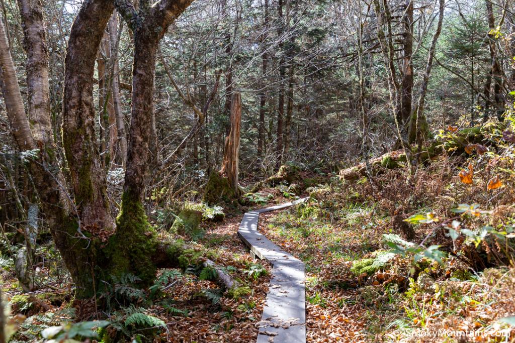 National Park Hikes - Spruce Fir Trail - Original Photo