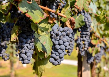 Ultimate Guide to Wineries in and Around Asheville, NC