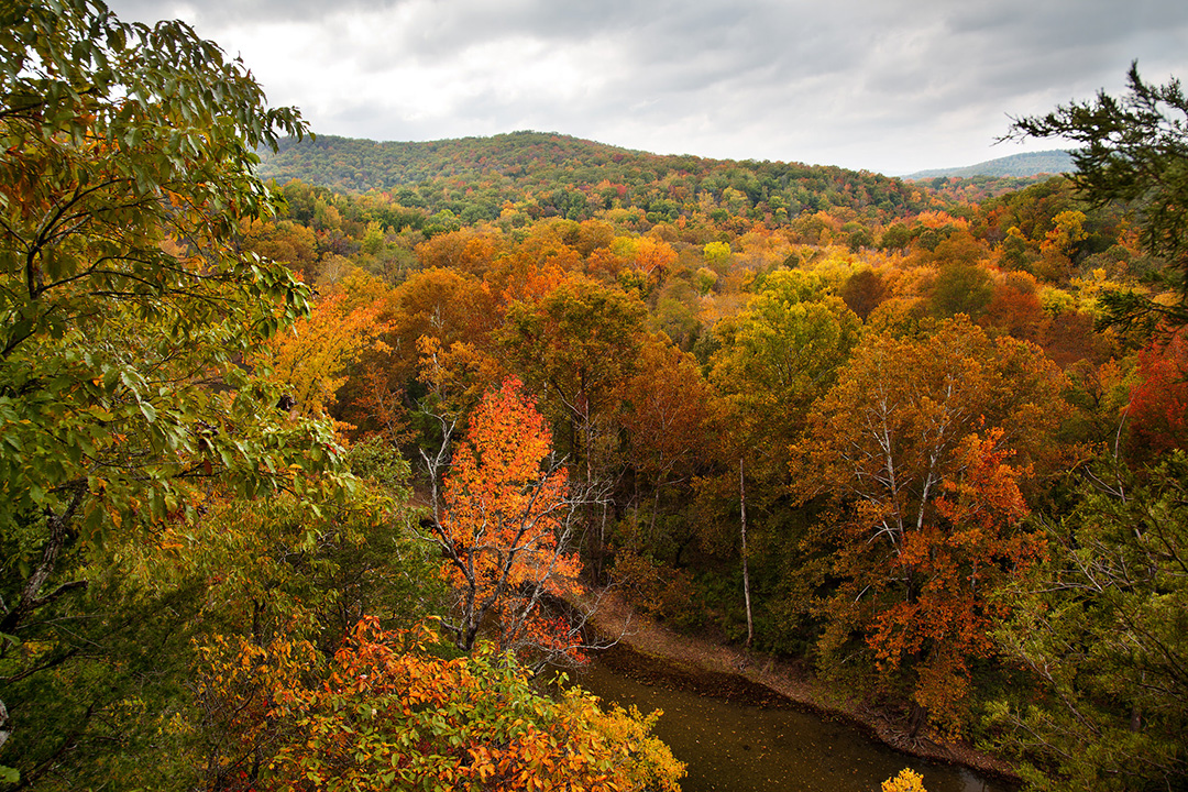 Top Places to See Fall Foliage in All 50 States