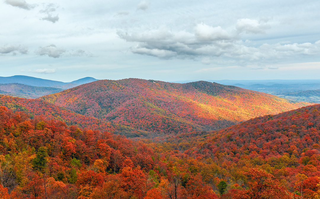 Top Fall Activities in Asheville You Don't Want to Miss in 2021